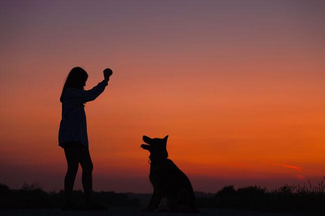 Pseća posla: Pristupi, metode i tehnike u odgoju i treningu pasa