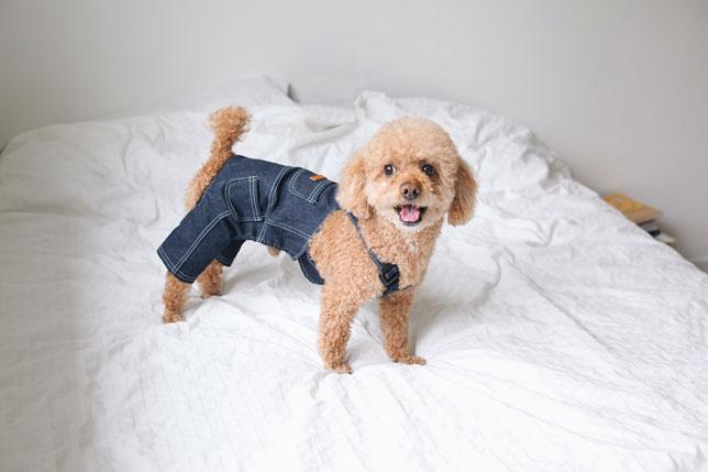 Odjeća za pse – moda ili potreba?