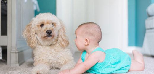 Lijepo je kada dijete odrasta uz životinje, ali…