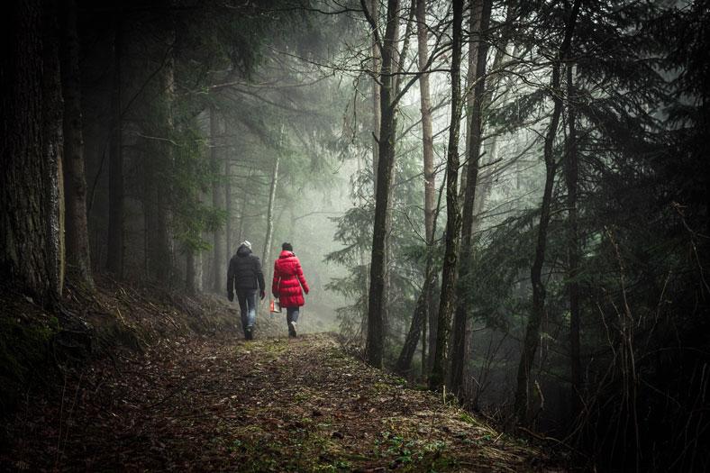 Terapija šume